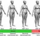Индекс массы тела — онлайн калькулятор